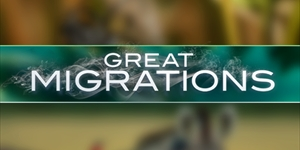 National Geographic Great Migrations
