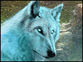 Myths of the World - Spirit Wolf Deluxe